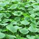 蔬菜种子、种苗