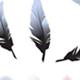 羽毛、羽绒