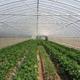 温室、大棚