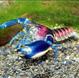宠物虾、观赏虾
