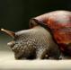 宠物螺、观赏螺