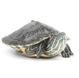观赏龟、鳖