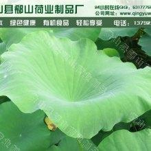 供应用于荷叶的花果茶批发 特级袋泡茶荷叶茶花草