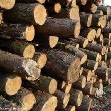供应用于的澳洲血檀木方进口报关代理青岛港