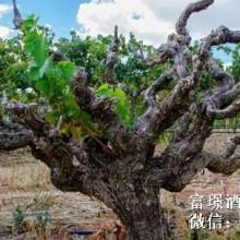 供应法国拉菲卡瑟天堂干红葡萄酒,广州进口红酒品牌批发公司,法国进口红酒代理批发公司,广州进口红酒团购批发批发