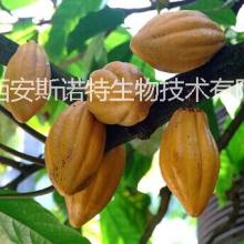 供应用于的可可提取物可可粉可可碱可乐果批发