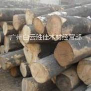 俄罗斯杨木原木图片
