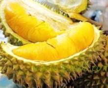 供应菠萝蜜,广西菠萝蜜供货商,南宁菠萝蜜批发