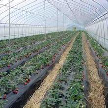 优质种植温室大棚建造专业蔬菜大棚建设基地图片