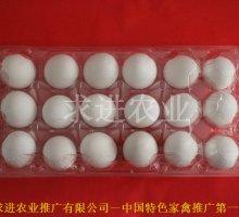 鸡蛋塑料托盘价格鸡蛋塑料托盘批发批发