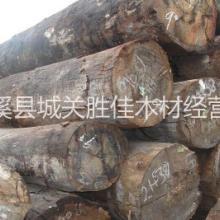 供应用于建筑,板材 家具,木门 工艺雕刻的供应缅甸进口香樟木图片