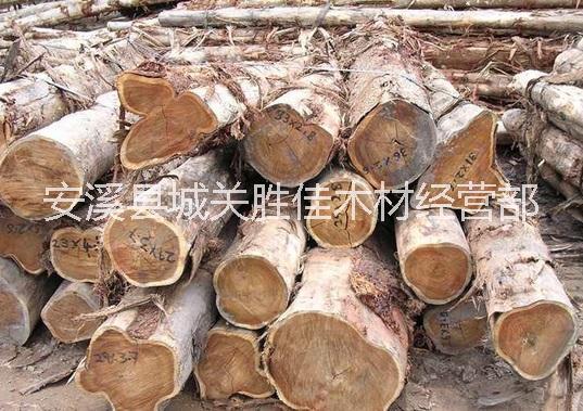 木门|工艺雕刻的供应大叶