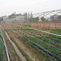 供应太空草莓苗预定2008新品种增产早熟