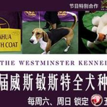 供应用于发布的上海五星体育广播咨询电话图片