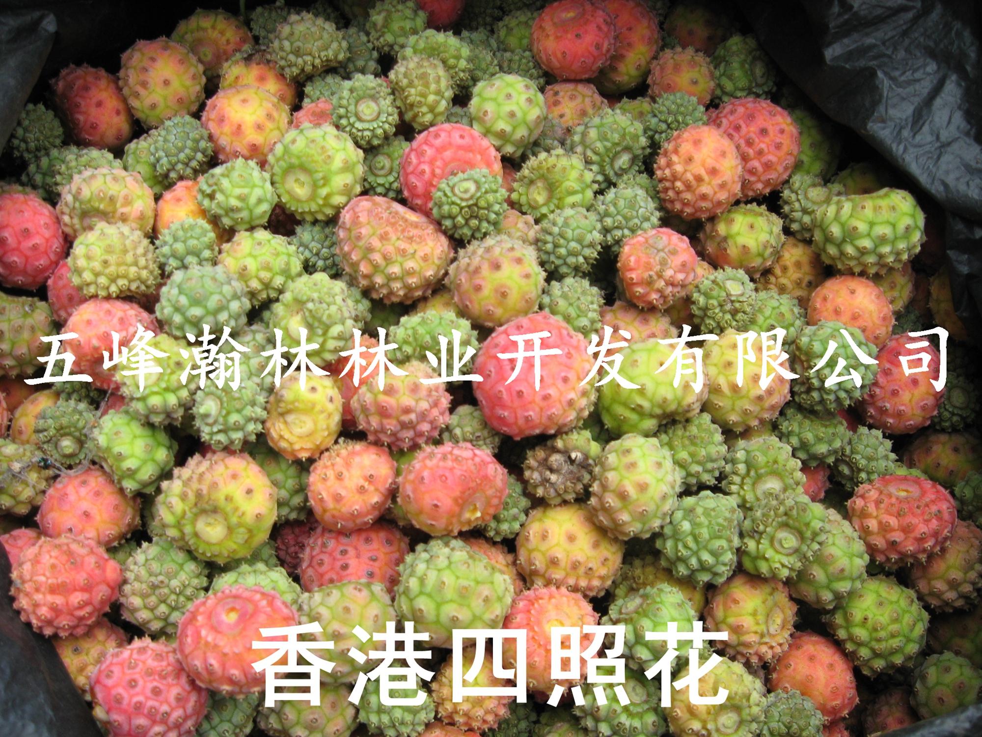 供应2015新香港四照花种子