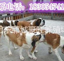 供应用于贸易的新疆北屯小狗价格