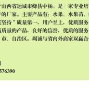 经济林苗木山西核桃苗木图片