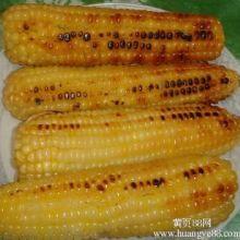 供应用于烘烤的烤玉米机  曲阜宏远机械专业生产烤玉米机