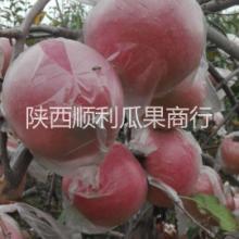 供应陕西大荔县膜袋红富士苹果价格-宏鑫果品专业合作社批发