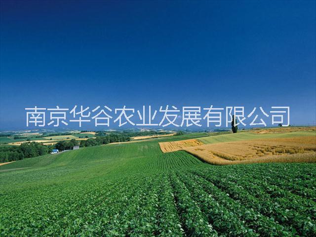 供应葡萄种植方法的栽培技术(葡萄种植技术)要点暨葡绑枝卡使用视频