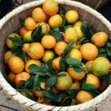 湖南郴州东江湖农家乐有哪些水果可以采摘、杨梅、桔子、桃子