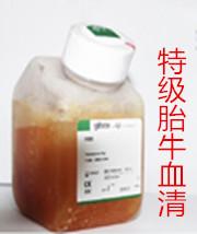供应特级胎牛血清(澳洲血源)10099-141批发