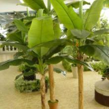 供应仿真芭蕉树 仿真植物绿植大型酒店展厅摆设美观造景树