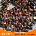 厂家直销江西白玉兰种子 红玉兰 玉兰树种子量大价优