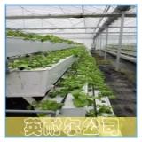 供应A字架立体种植槽 温室草莓槽