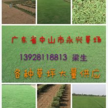 供应别墅花园草坪价格,广东别墅花园草坪批发,广东哪里有卖广别墅花园草坪