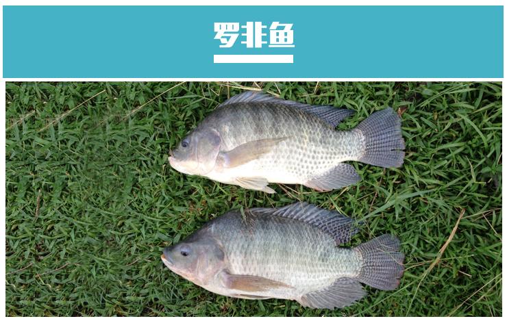 中国淡水养殖对象除传统的鲤科鱼类外
