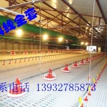 供应养殖设备的肉鸡平养料线料线配件自动水线批发