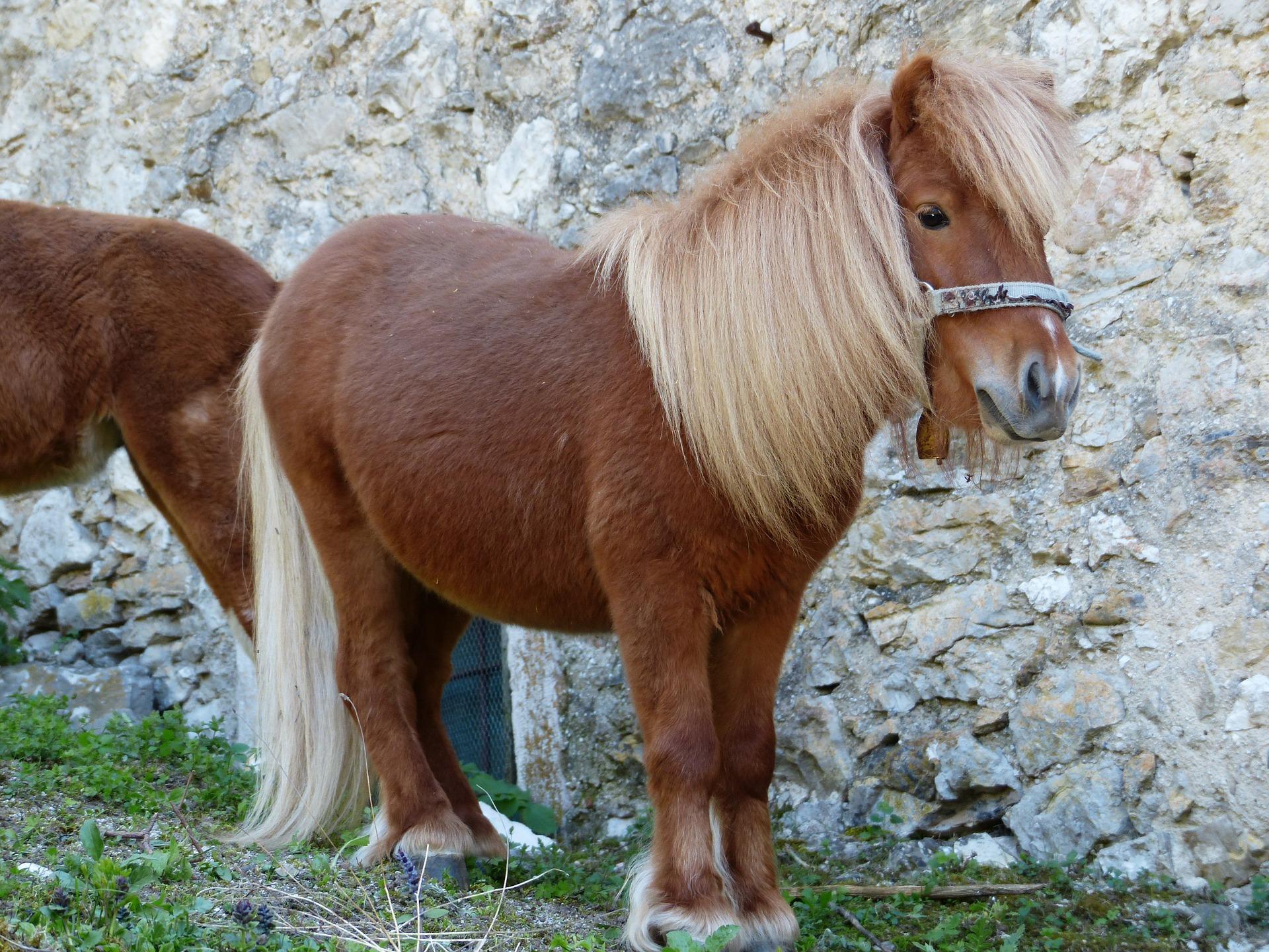 可爱图片宠物马