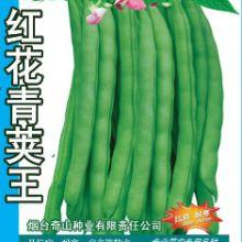 供应用于四季豆基地的红花青荚王 四季豆种子