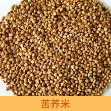 供应苦荞米 高原全胚黑苦荞米 黑苦荞米 苦荞精米 粮油作物