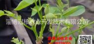 淄博冠核农业开发技术有限公司