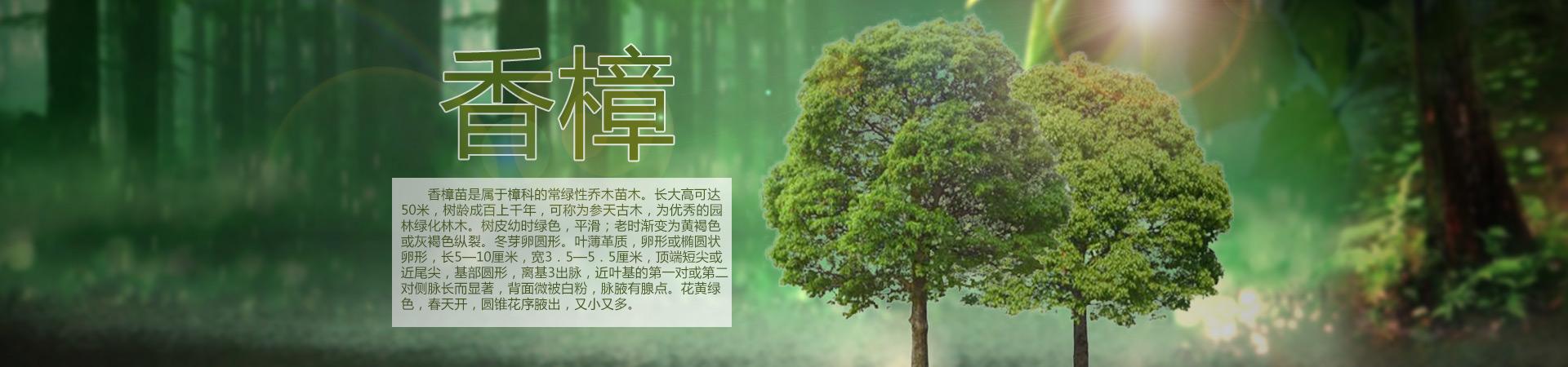 湖北荆州八林山苗木基地