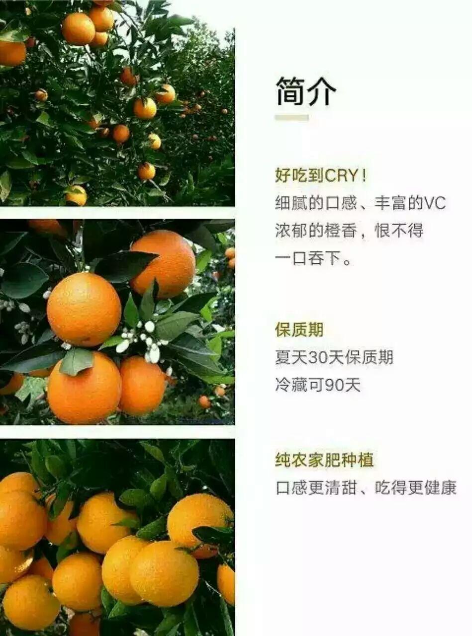 供应湖北夏橙/生产地/最优质的/图片/的营养价值