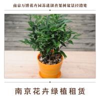 南京花卉绿植租赁