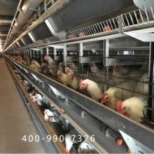 蛋鸡笼厂家 大佳蛋鸡笼经久耐用