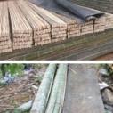 内蒙古竹架板哪里卖便宜图片