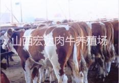 山西宏达肉牛养殖场简介