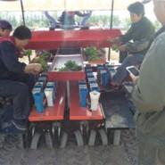 移栽机,甜叶菊专用移栽机,栽植机图片