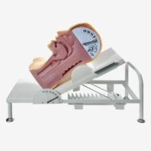 供应KAY-H88高级吞咽机制模型-上海康谊牌人体吞咽机制模拟人-厂家咽口腔护理技能培训模型-喉咙解剖模型-优质吞咽机图片