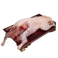 苏尔雅特羔全羊 苏尔雅特羔羊肉价格 西蒙(锡盟)羊肉批发商 产厂家