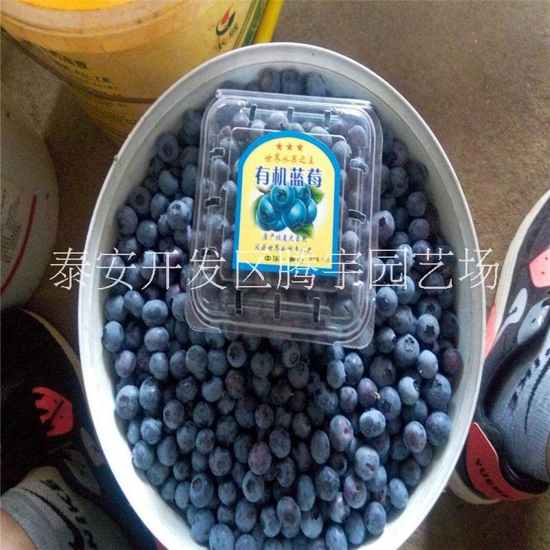 重庆百色农业科技开发有限公司图片库