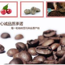 云南小粒咖啡烘焙豆巴西风味拼配AA级厂家订单烘培1级新鲜度批发