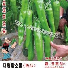 辣椒种子中原椒王008图片