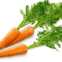 胡萝卜提取物