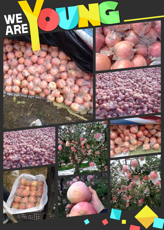 供应陕西优质红富士基地纸袋红富士苹果膜袋红富士苹果价格
